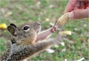 squirrel-give-that-peanut_zjxqd_r